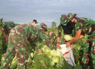 Ringankan Beban, Satgas Yonif 411 Kostrad Bantu Warga Sota Papua Panen Sayur